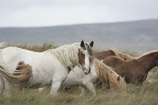 Brown and white horses names