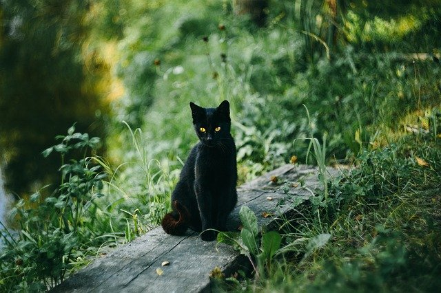 Witchy Black cat