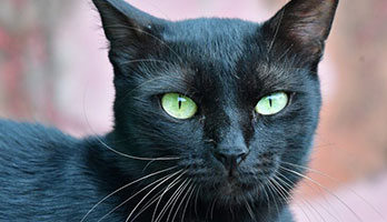 black-cat-names