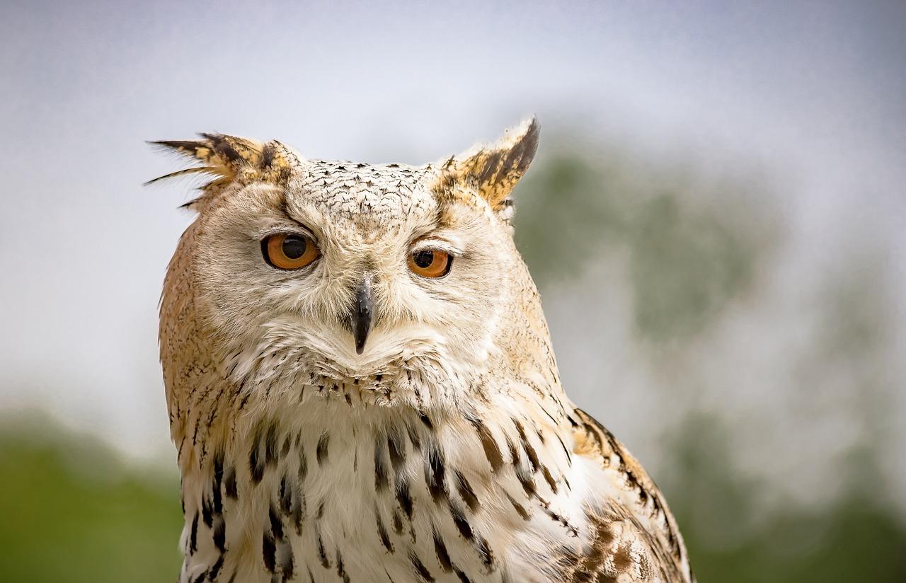 cute owl names