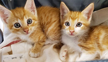 twin-cat-names